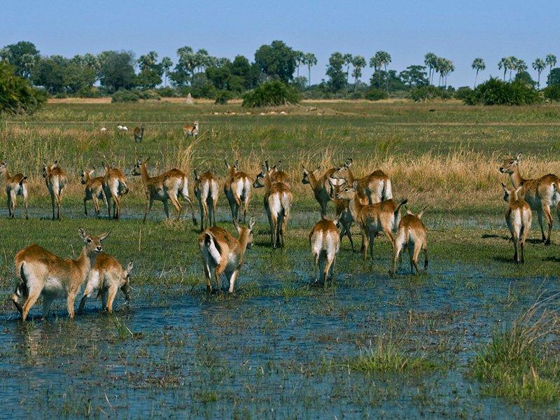Botswana-Okavango-LittleMombo-Camp-nimalLandscape