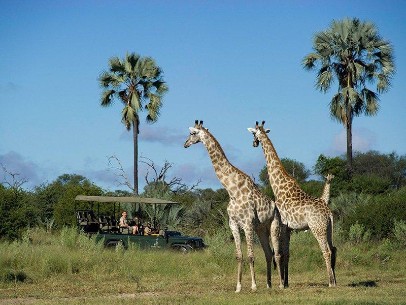Botswana-Okavango-TubuTree