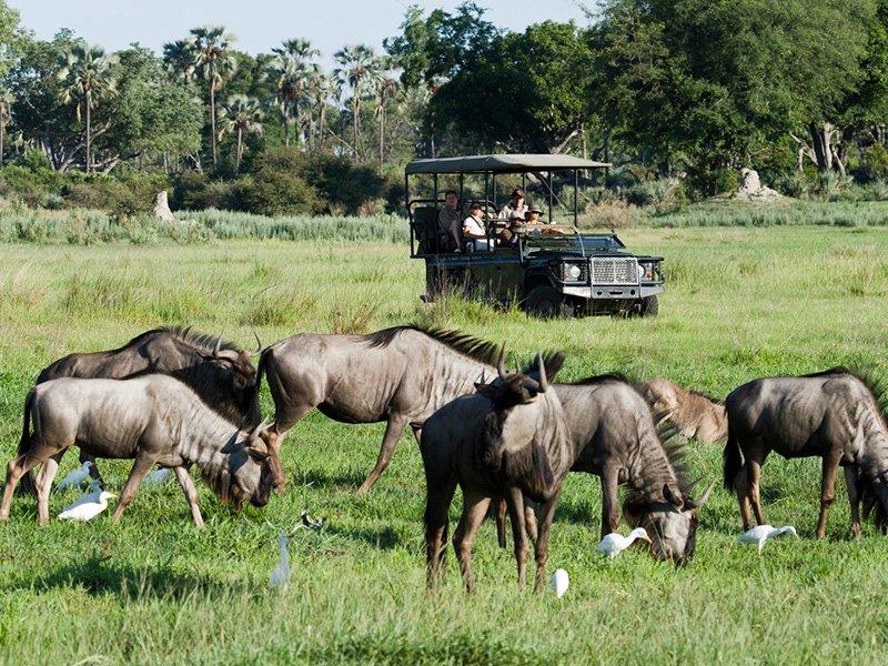 Chitabe-Botswana-Okavango-Delta-game-drive