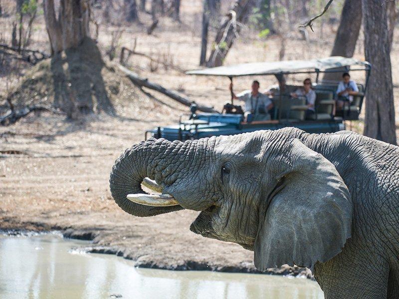 Malawi-Liwonde-MvuuCamp-Elephant
