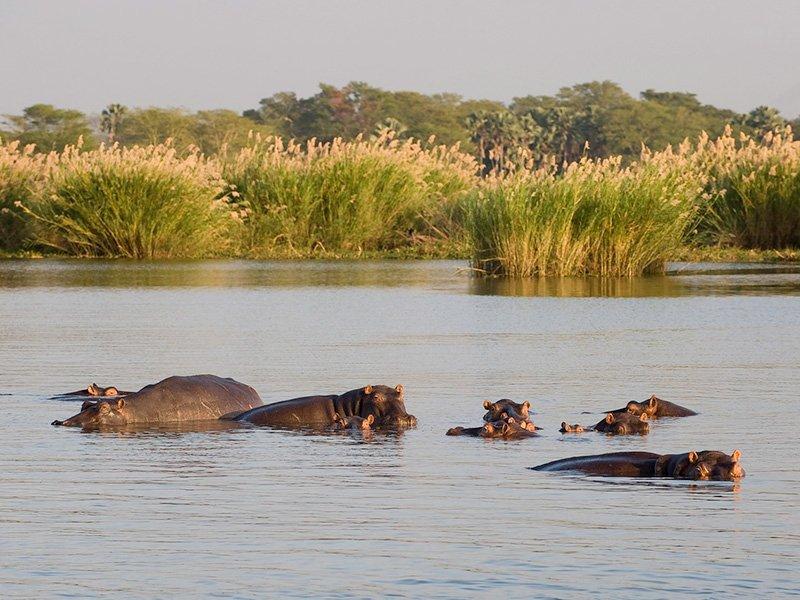 Malawi-Liwonde-MvuuCamp-HippoLake