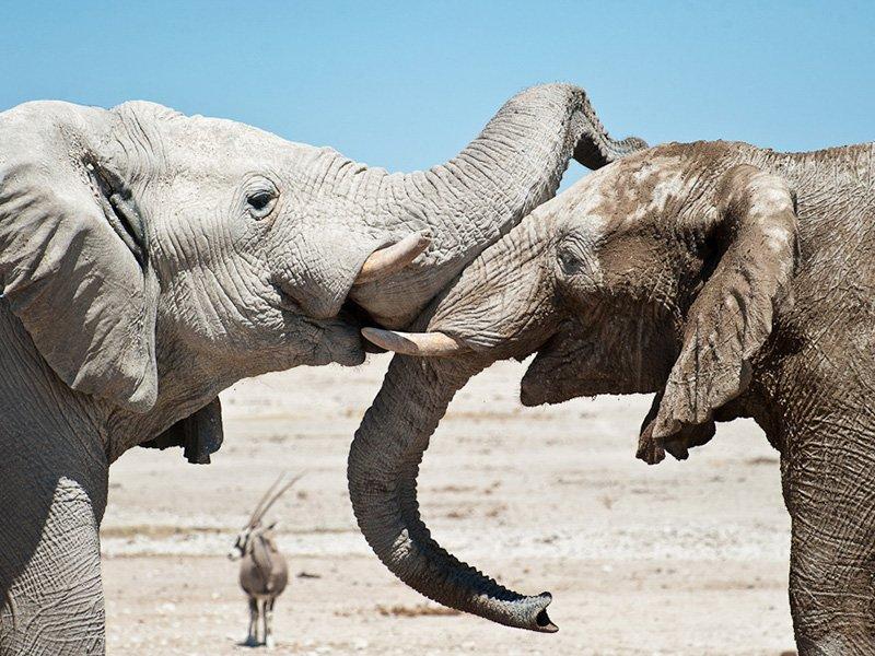 Namibia-Etosha-Anderssons-Camp-Elephants