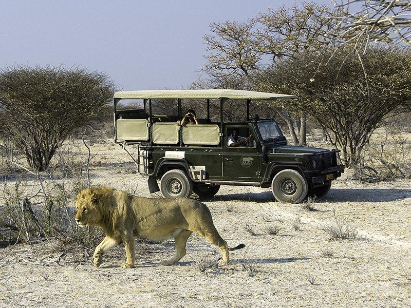 Namibia-Etosha-Ongava-Lodge-game-drive