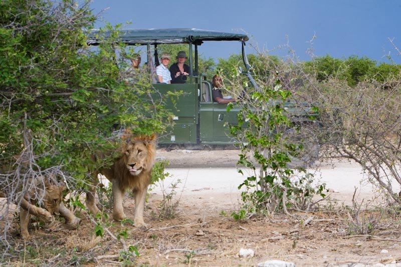Namibia-Etosha-Villa-Mushara-Etosha-Safari-Drive