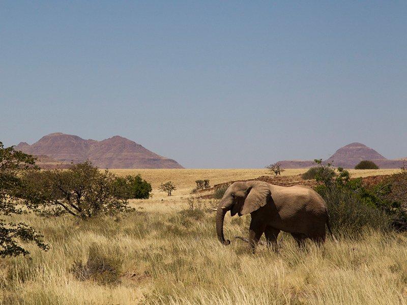 Namibia-Palmwag-DesertRhino