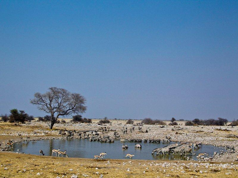 Namibia.Ongava_Etosha.OngavaTented