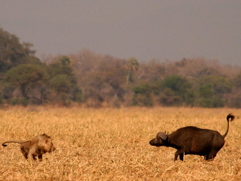 Tanzania-Katavi-Chada-Katavi-Wildlife