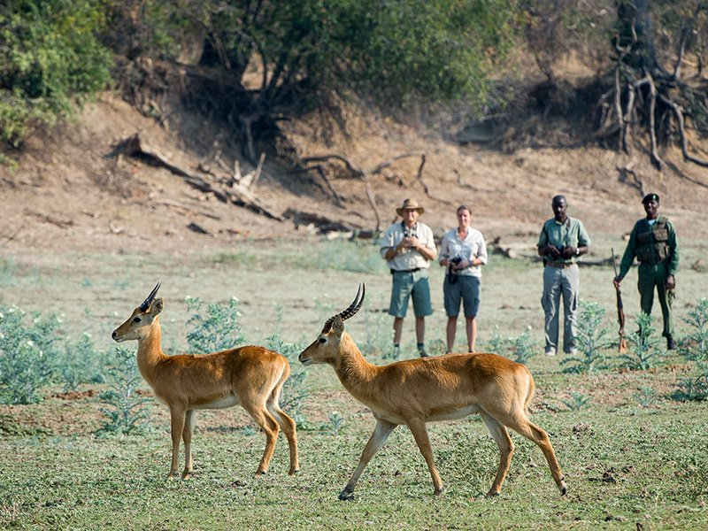 Zambia-South-Luangwa-Luangwa-River-Camp-Game-Walk
