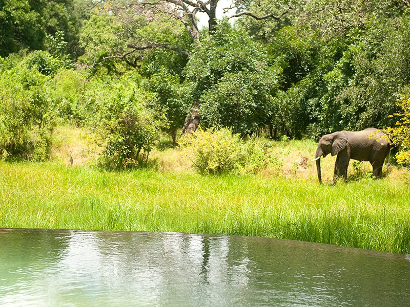 Zambia-South-Luangwa-Nkwali-Elephant