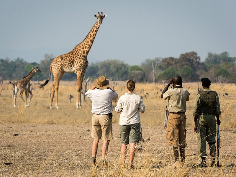 Zambia-South-Luangwa-Nsefu-Game-Walk