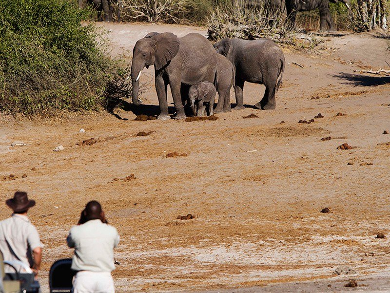 Botswana-Chobe-Chobe-Savanna-Game-Viewing