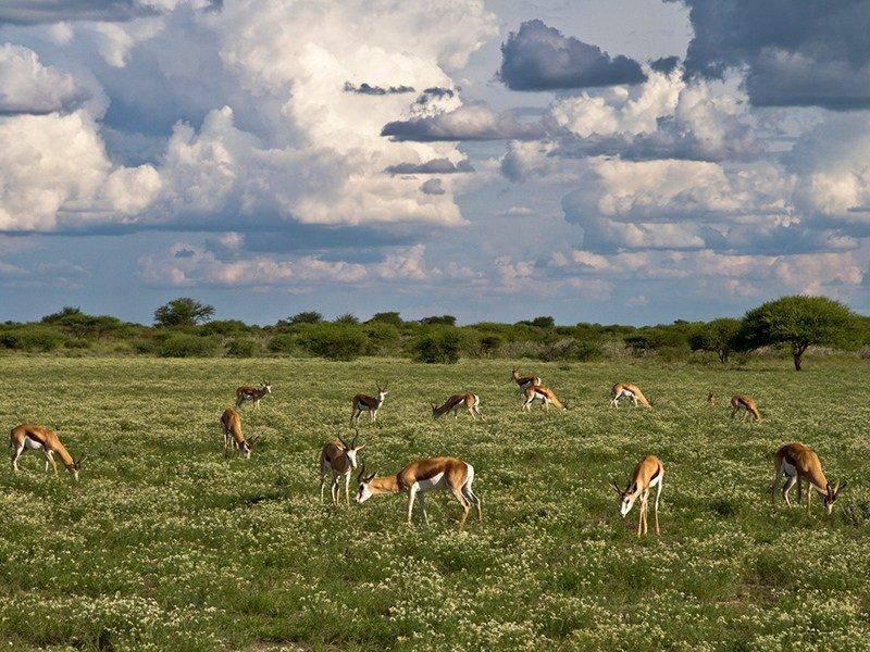 Botswana-Kalahari-Kalahari-Plains-Summer-landscape