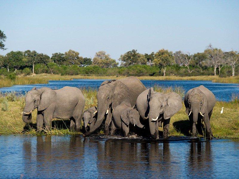 Botswana-Linyanti-KingsPool-Elephants