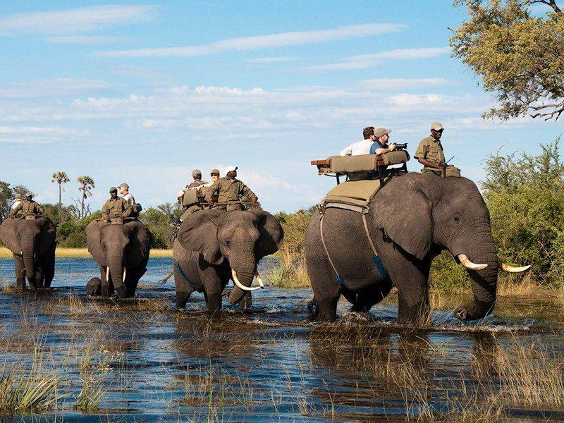 Botswana-Okavango-Delta-Abu-Camp-Game-Walk