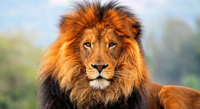 What Animals Might You See on an African Safari? - Signature Safaris