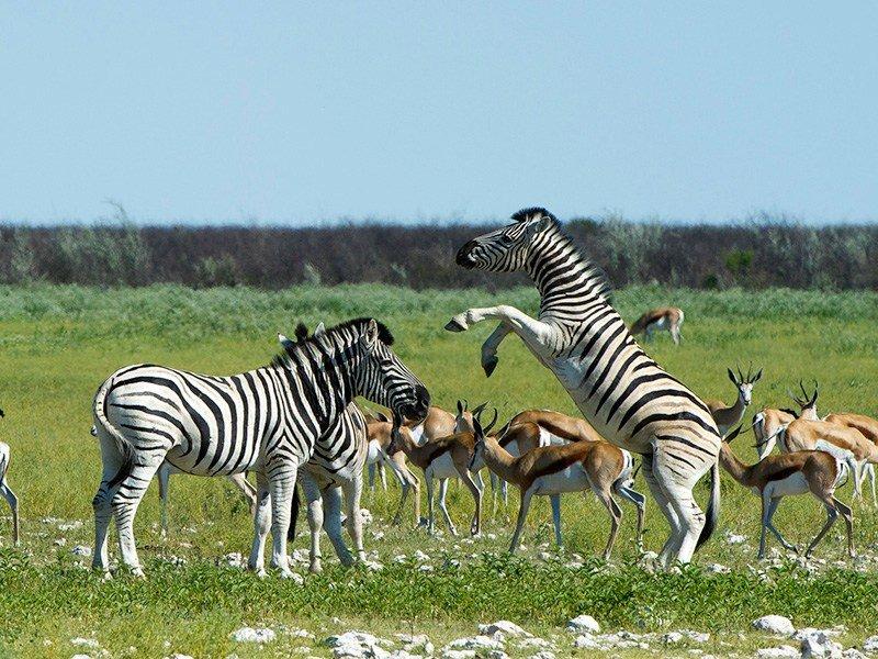 Namibia.Ongava.Etosha.OngavaLodge