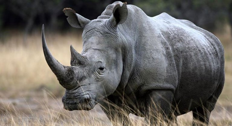 What Animals Might You See on an African Safari? - Signature