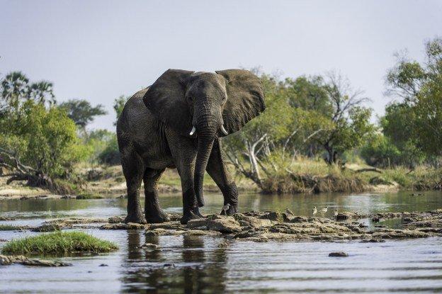Toka_Leya_Elephant