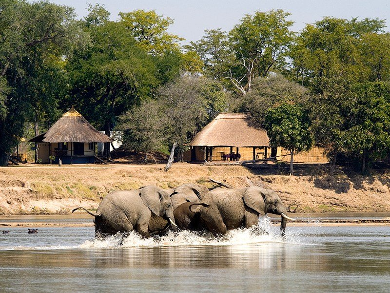 Zambia-South-Luangwa-Nsefu-Elephants