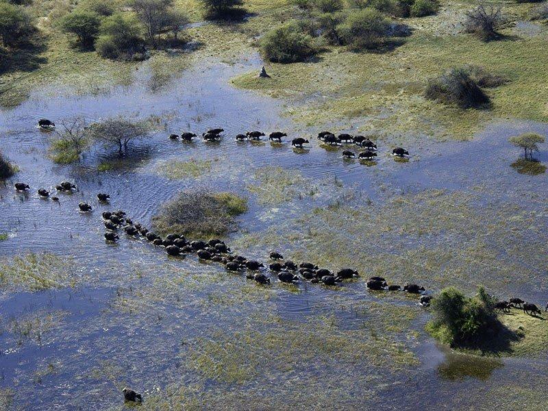 botswana-okavango-vumbura-plains-aerial