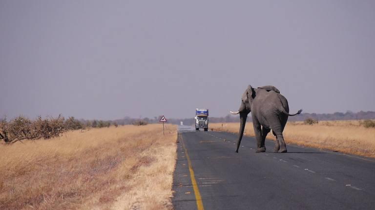 botswana-road